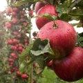 Hellevgaard_SMAG_æbler_2