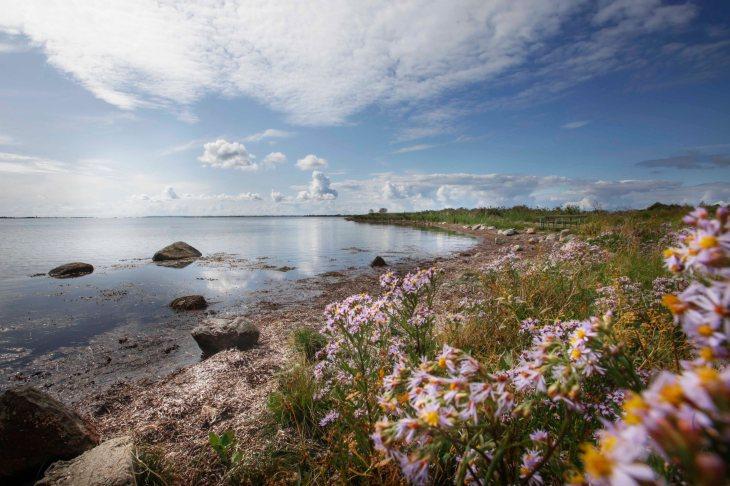 Skarø_is_SMAG_Naturtip_Yndlingssted_Stranden